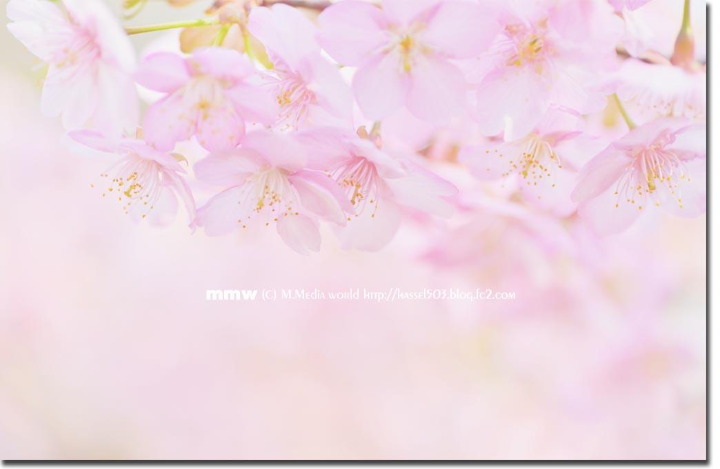 shinjyuku_14.jpg