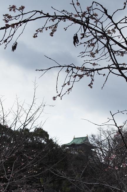 02・十月桜