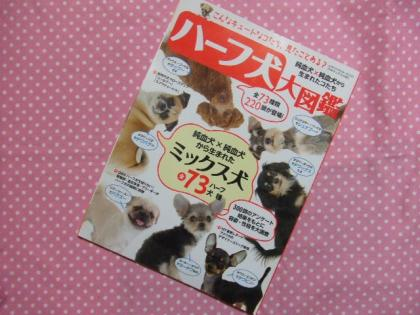 2010_01210553.jpg