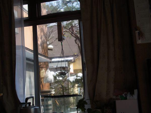 ヤマガラ・メジロ
