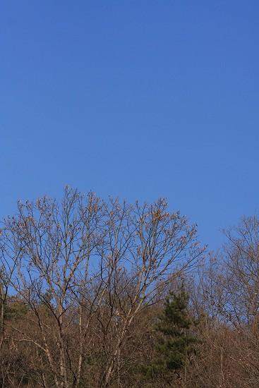 冬の青空1437-s