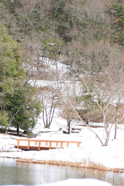 雪の保護センター0141_R