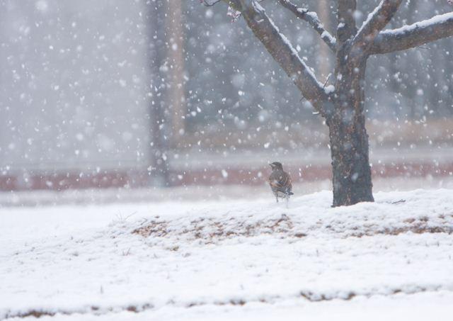 雪見鳥_R