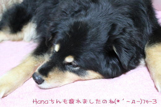 0213_hanasan.jpg