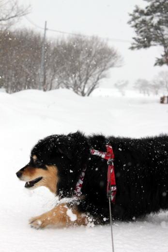 積雪にもめげず。。。