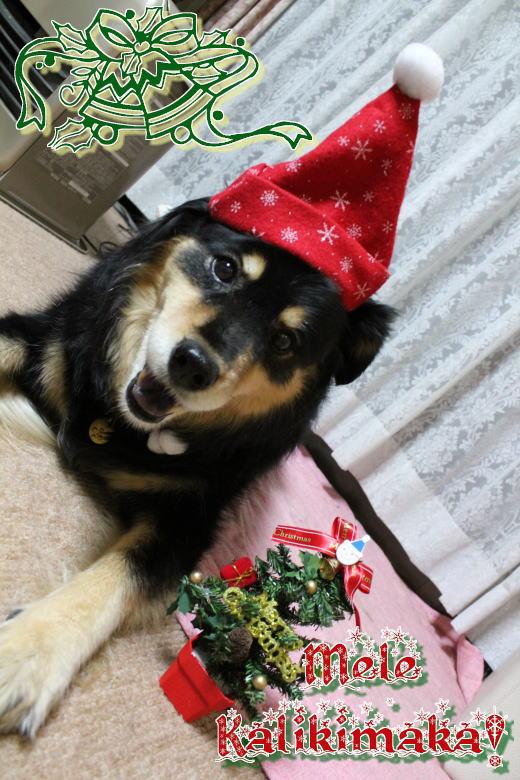 クリスマスなのね☆