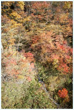 栂池 ロープウェイからの眺め2