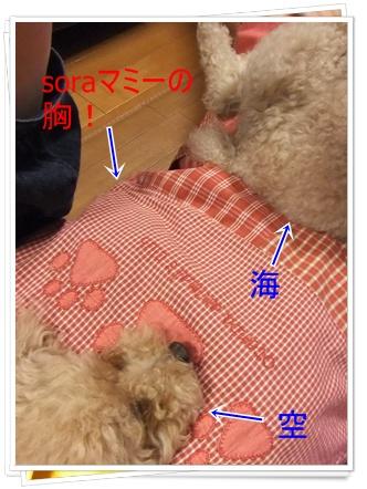 2011_0518_195306-DSCF4148.jpg