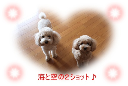 2011_0520_103822-IMG_2312.jpg