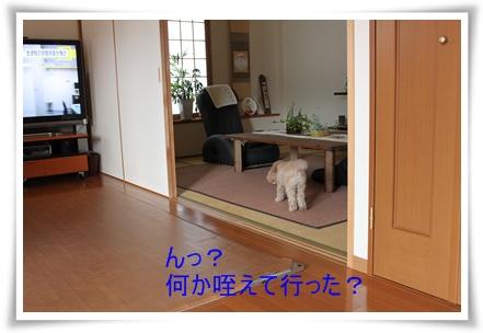 2011_0525_075845-IMG_2330.jpg