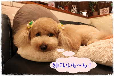 2011_0526_211912-IMG_2392.jpg