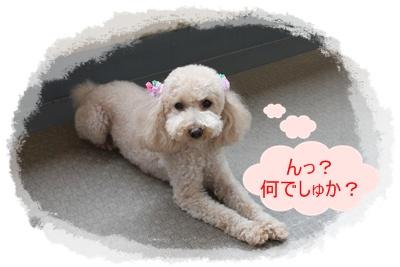 2011_0528_083420-IMG_2428.jpg