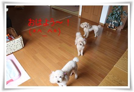 2011_0531_125941-IMG_2438.jpg