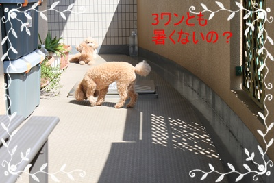 2011_0628_152202-IMG_2653.jpg