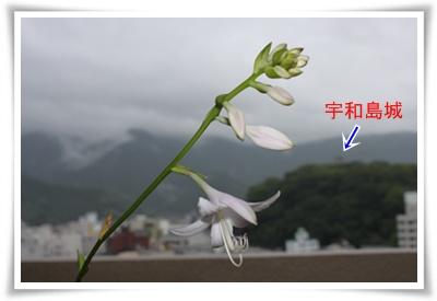2011_0701_080116-IMG_2698.jpg