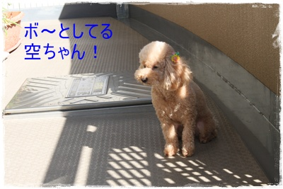2011_0705_161541-IMG_2763.jpg