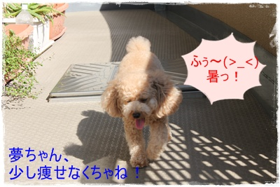 2011_0705_161551-IMG_2764.jpg