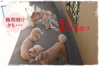 2011_0705_161559-IMG_2766.jpg