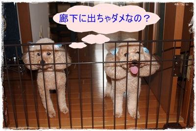 2011_0721_130011-IMG_2964.jpg