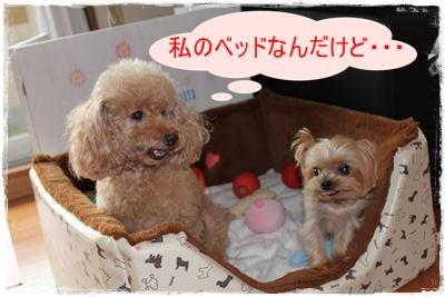 2011_0828_174053-IMG_3841.jpg