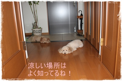 2011_0922_101010-IMG_4086.jpg