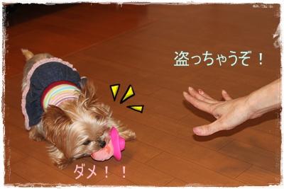 2011_1003_173225-IMG_4227.jpg
