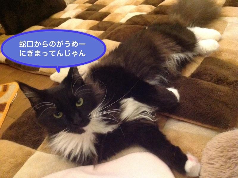 image_20130123214059.jpg