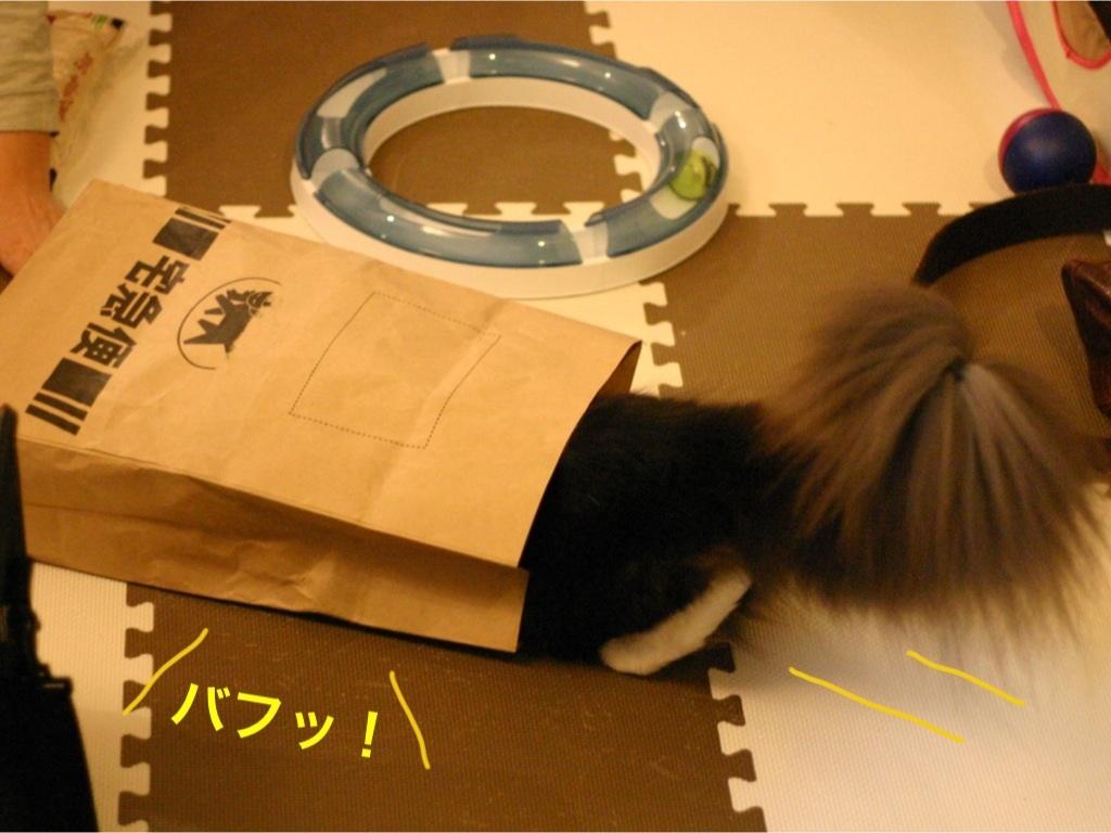 image_20130318211009.jpg