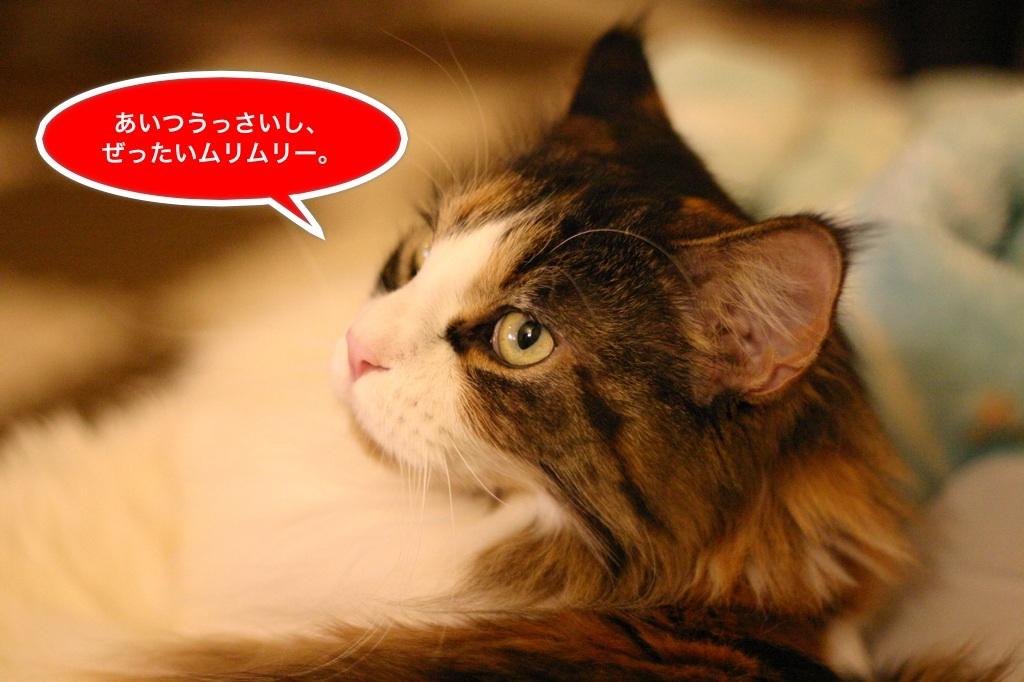 image_20130319195058.jpg