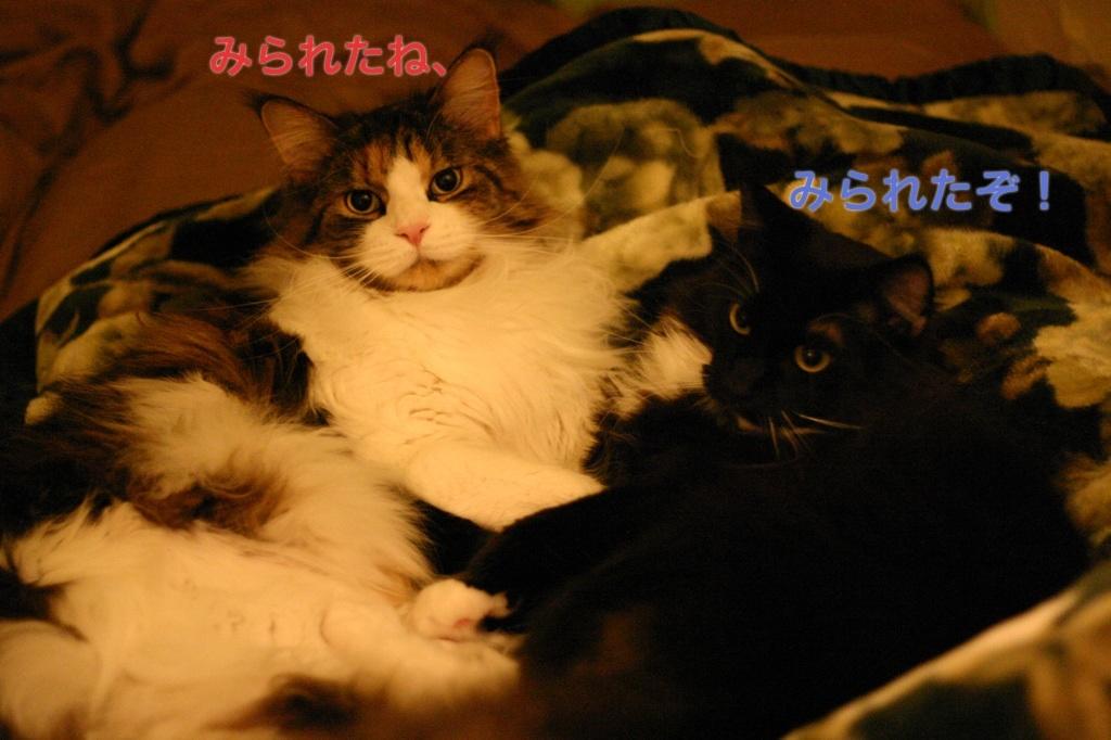image_20130319195229.jpg