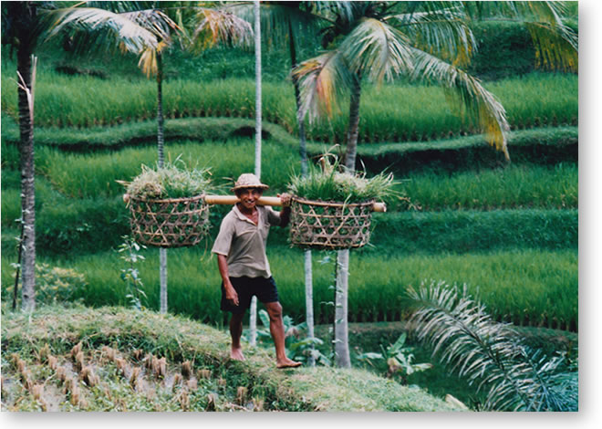 バリ島ウブド棚田の農夫