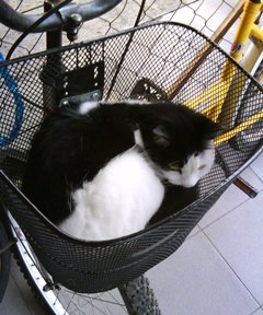 noni in basket