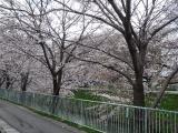 お花見convert_20100329113037