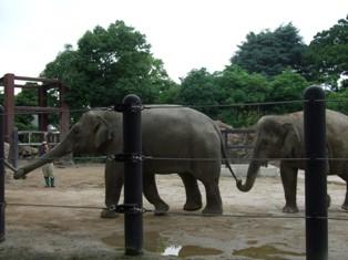 手つなぎ象さん