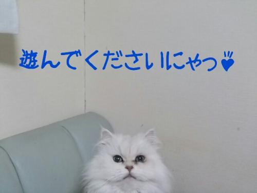 2013-02-01-09-39-12_deco_convert_20130201095009.jpg