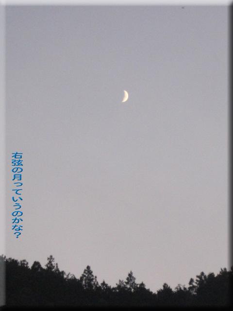 右弦の月_edited-1