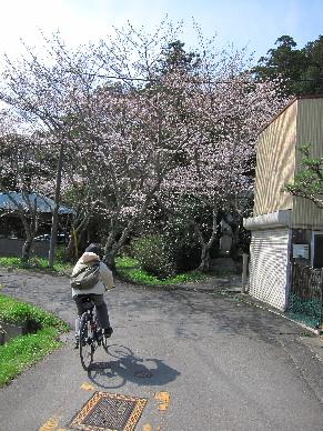2012_0401桜0024