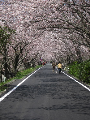 2012_0401桜0048