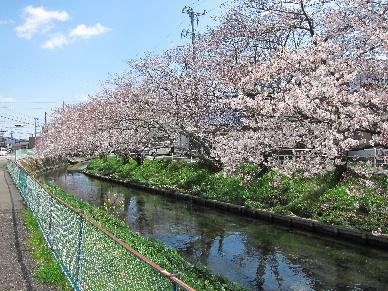 2012_0401桜0105