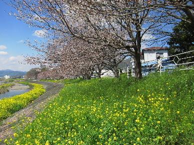 2012_0401桜0121