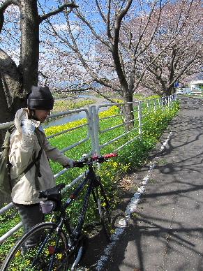 2012_0401桜0122