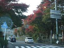 2008_110610022.jpg