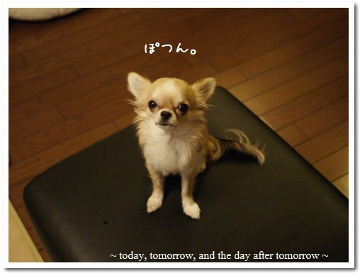 2010-01-18-07.jpg
