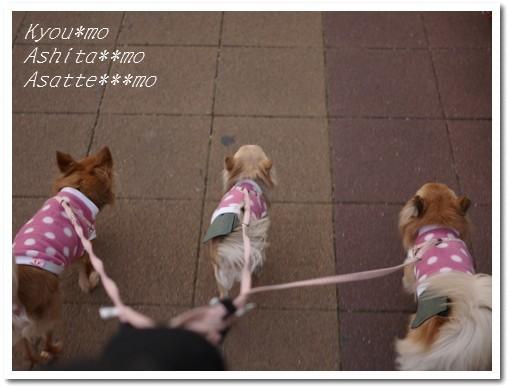 2010-01-31-01.jpg