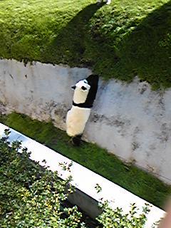 のぼるパンダ