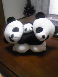 パンダのぬいぐるみ♪