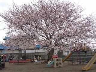 2010_0408悠希0012