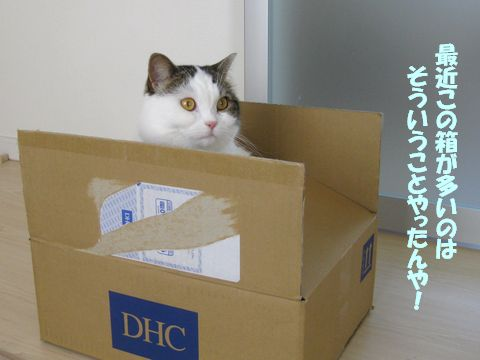 DHCですか!