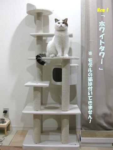 ばっちりモデル猫