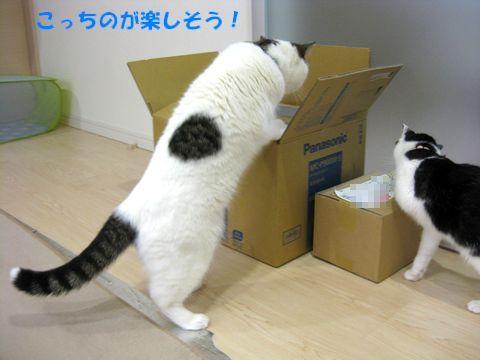 この箱楽しそう